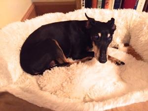 Matt's in-law's dog Dixie